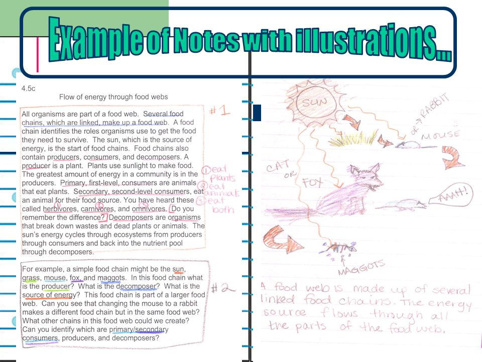 Example of Notes with illustrations…