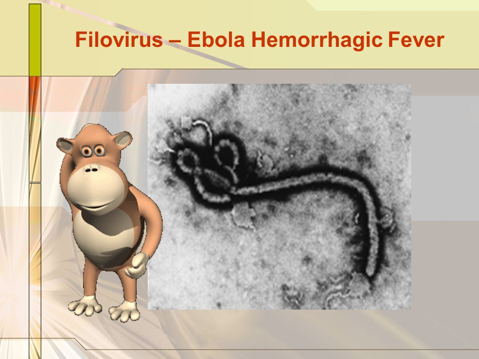 Filovirus – Ebola Hemorrhagic Fever