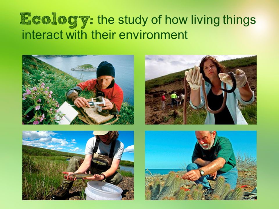 the study of how living things interact with their environment