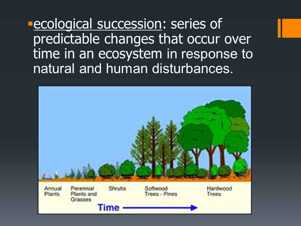 ecological succession: series of predictable changes that occur over time in an ecosystem in response to natural and human disturbances.