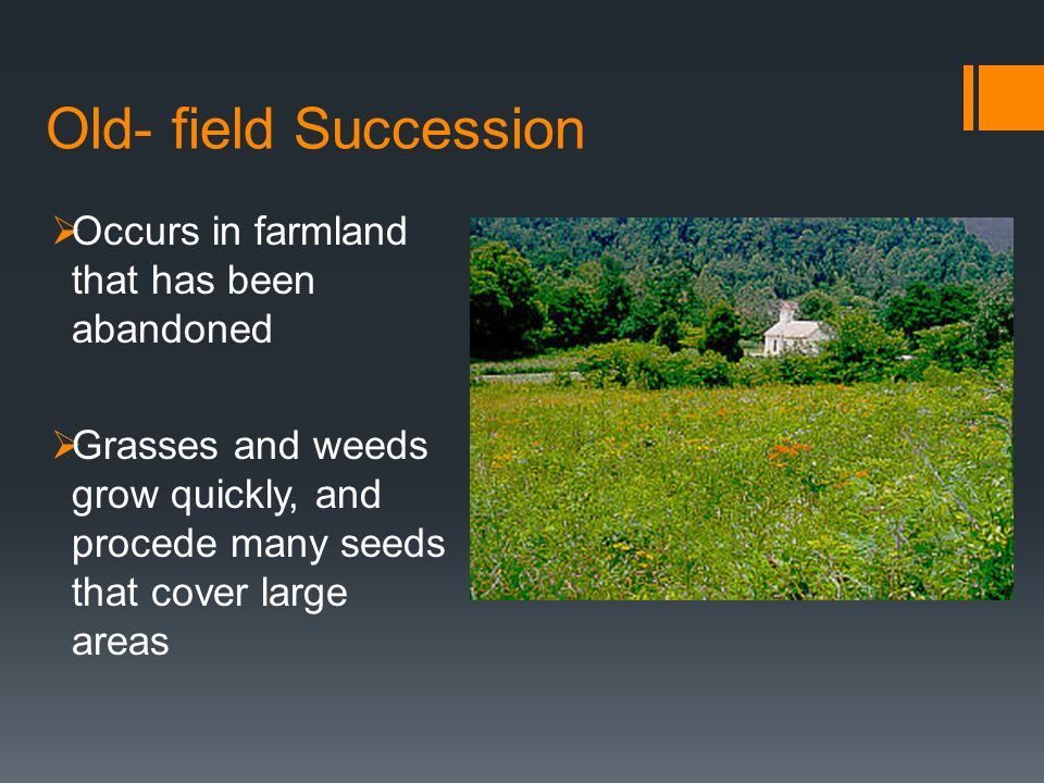 Old- field Succession Occurs in farmland that has been abandoned