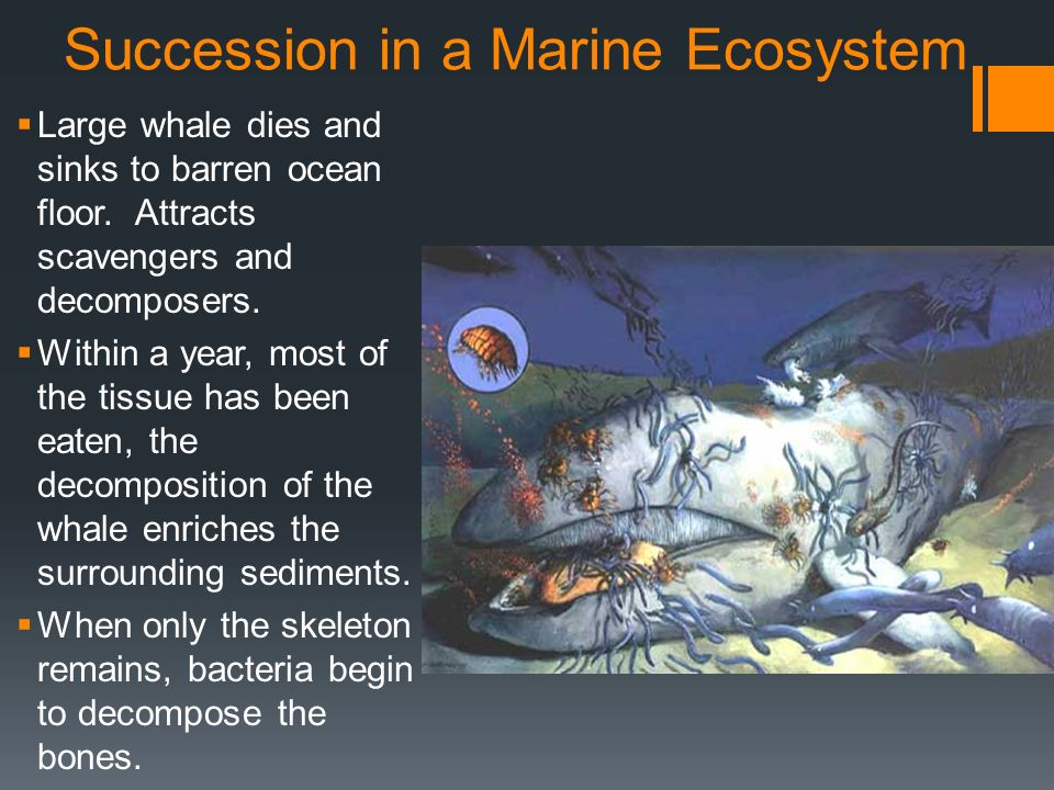Succession in a Marine Ecosystem