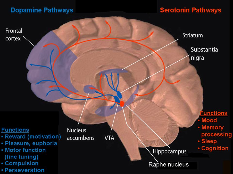 Two of the brain-signaling pathways targeted by drugs of abuse transmit dopamine and serotonin: Dopamine and serotonin are chemicals (also known as neurotransmitters) that are normally involved in communication between neurons in the brain.