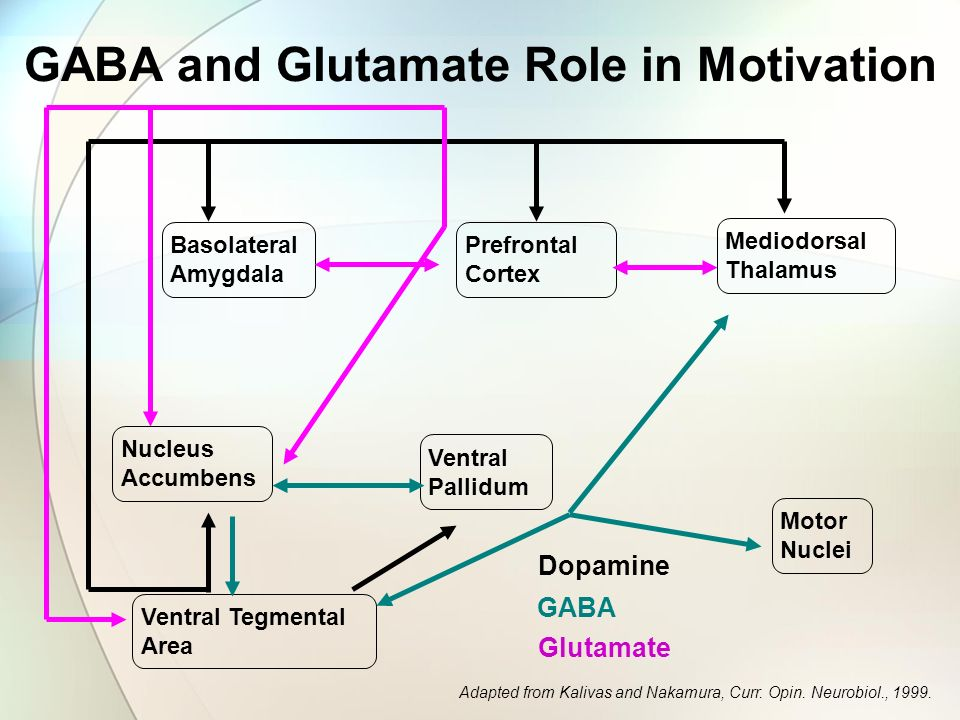 GABA and Glutamate Role in Motivation
