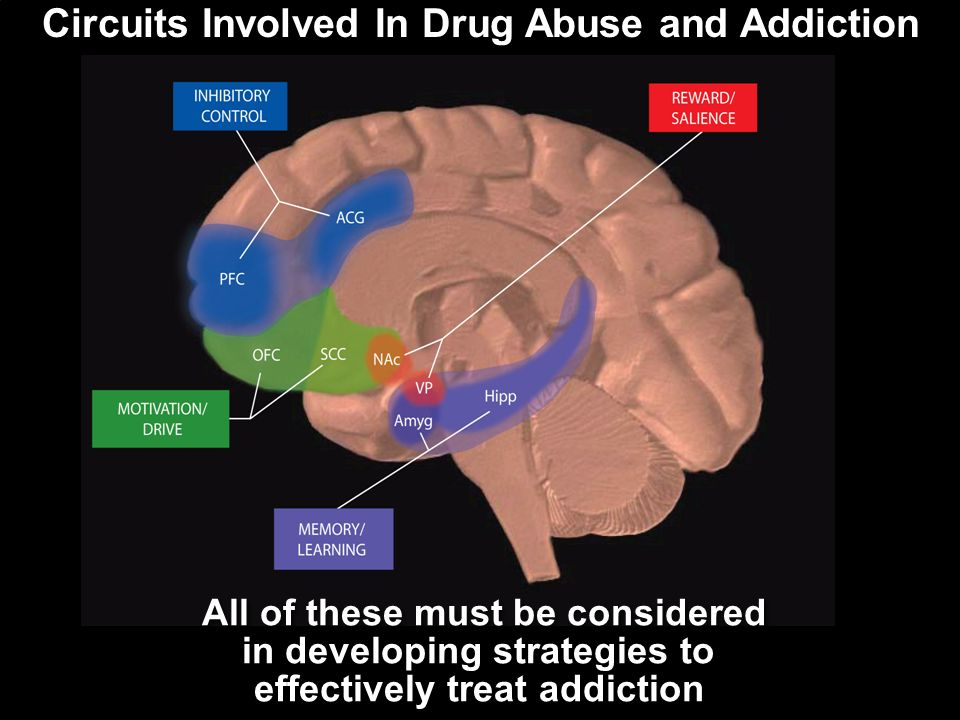 Circuits Involved In Drug Abuse and Addiction