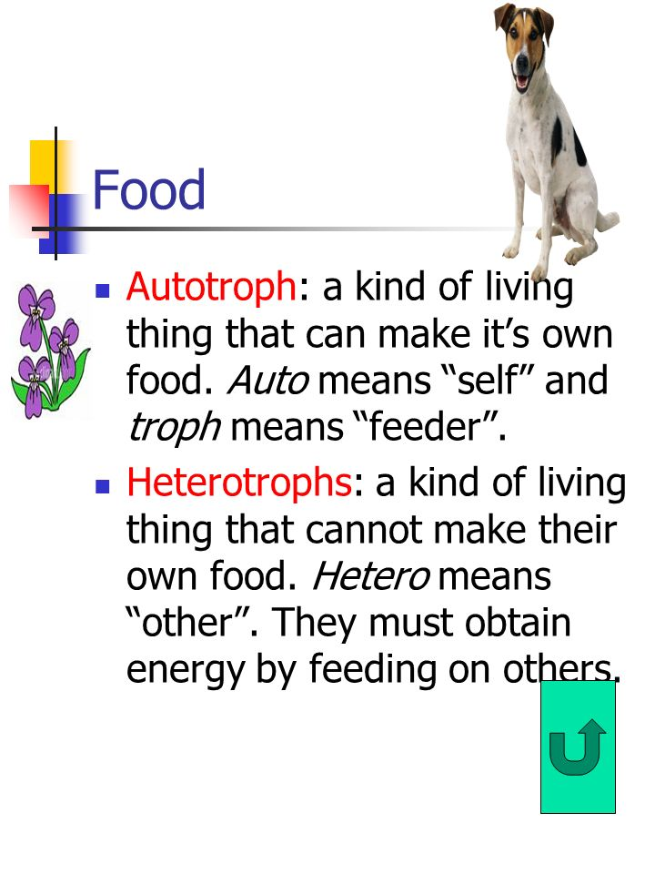 Food Autotroph: a kind of living thing that can make it's own food. Auto means self and troph means feeder .