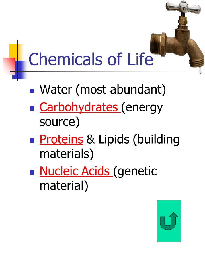 Chemicals of Life Water (most abundant) Carbohydrates (energy source)