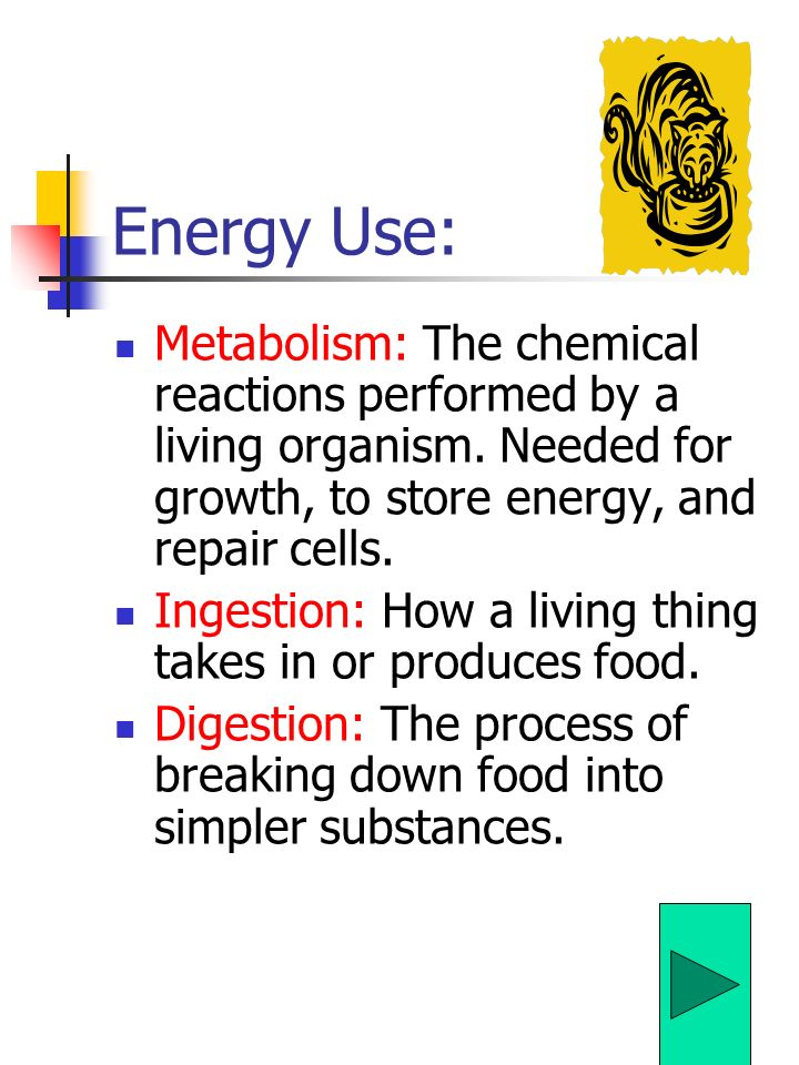 Energy Use: Metabolism: The chemical reactions performed by a living organism. Needed for growth, to store energy, and repair cells.