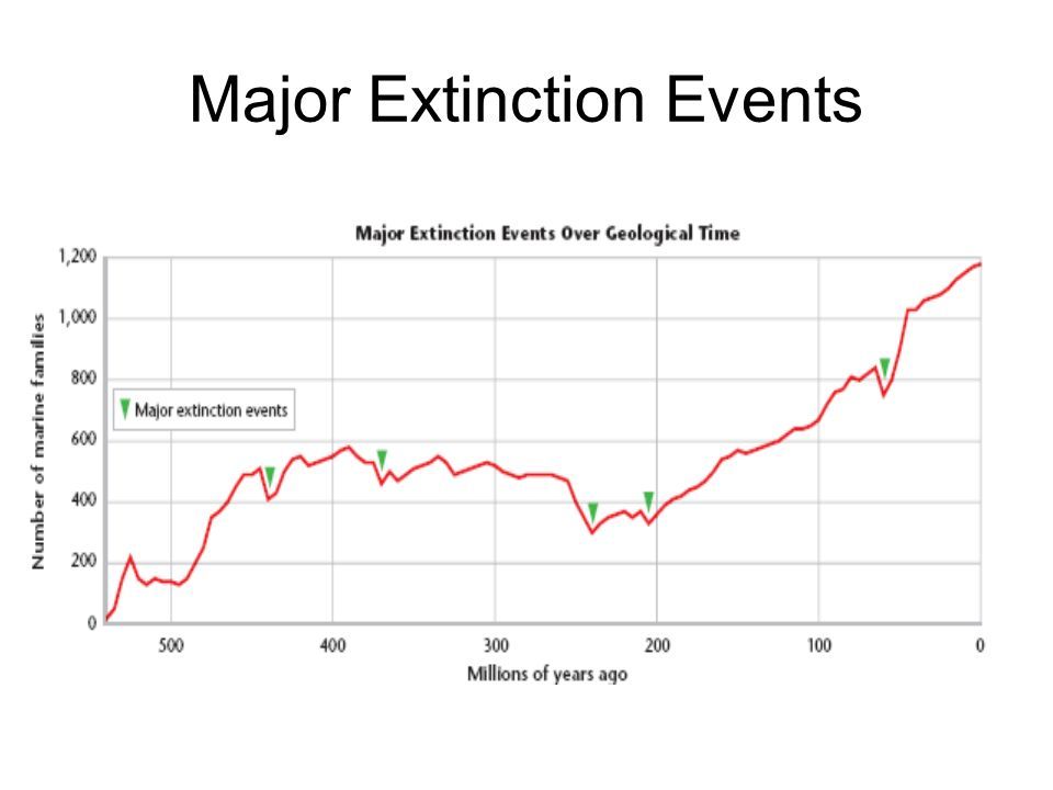 Major Extinction Events