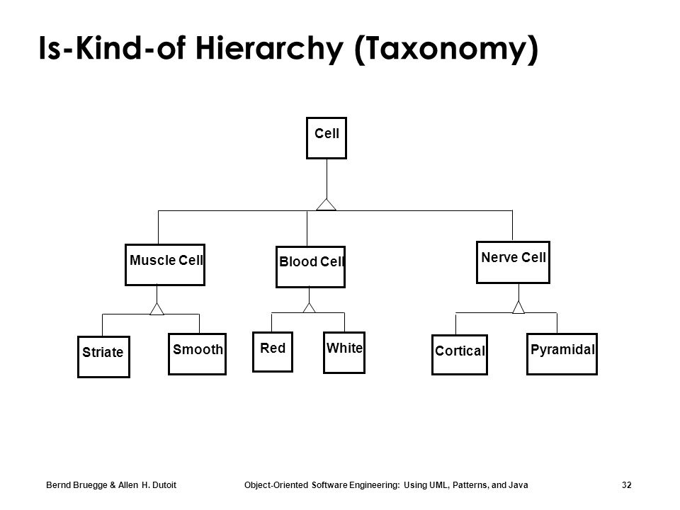 Is-Kind-of Hierarchy (Taxonomy)