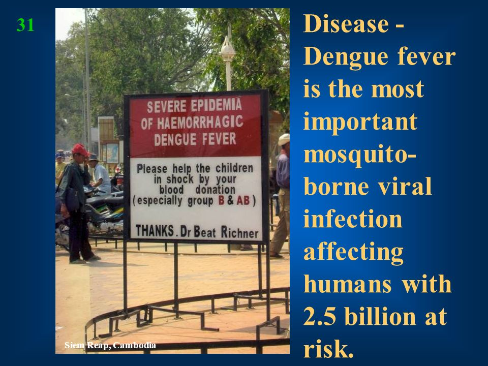 Disease - Dengue fever is the most important mosquito-borne viral infection affecting humans with 2.5 billion at risk.