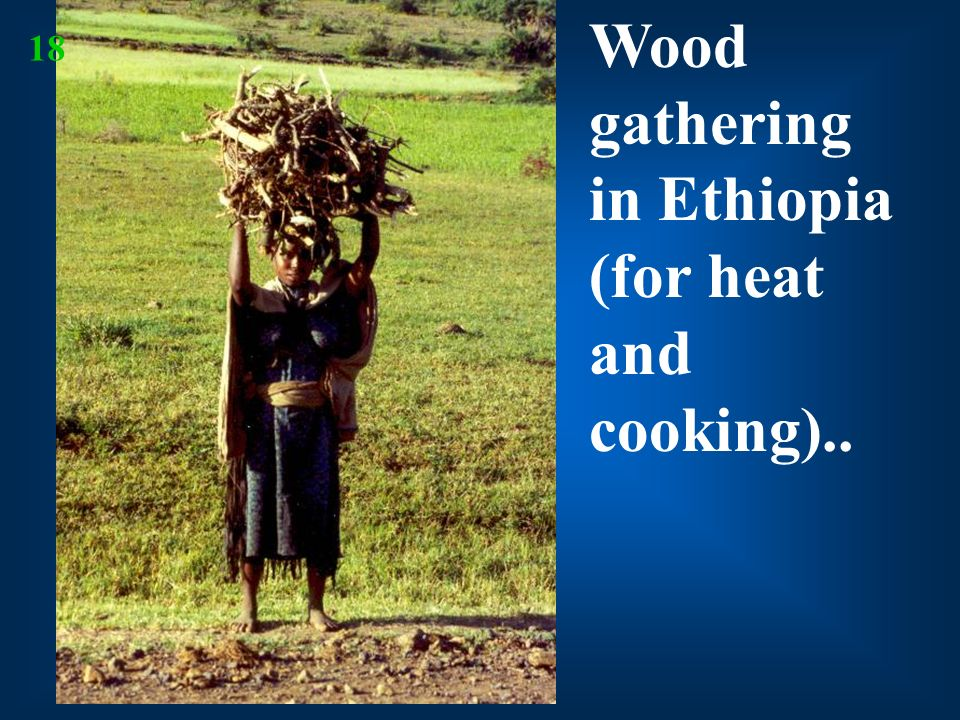 Wood gathering in Ethiopia (for heat and cooking)..