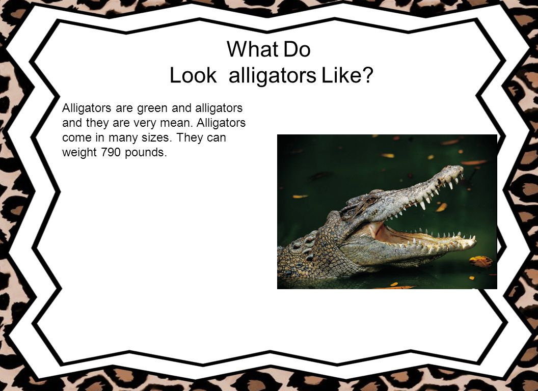 What Do Look alligators Like