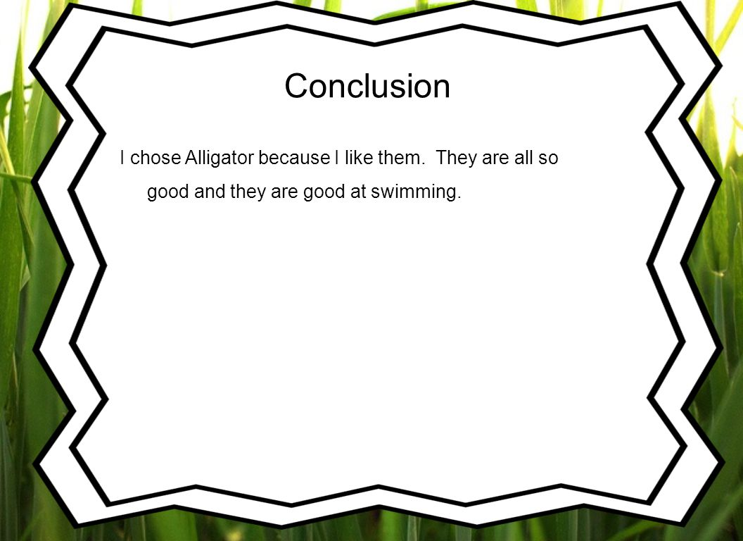 Conclusion I chose Alligator because I like them.