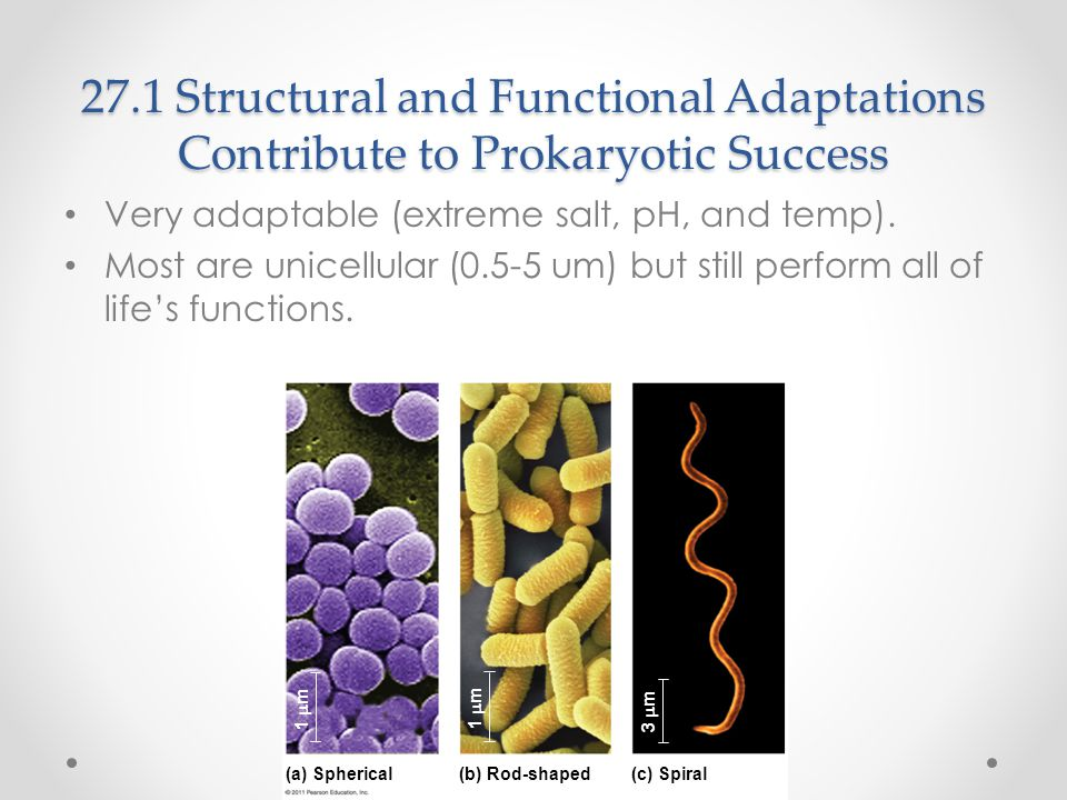 27.1 Structural and Functional Adaptations Contribute to Prokaryotic Success