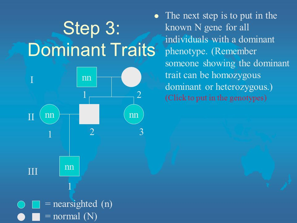 The next step is to put in the known N gene for all individuals with a dominant phenotype. (Remember someone showing the dominant trait can be homozygous dominant or heterozygous.) (Click to put in the genotypes)