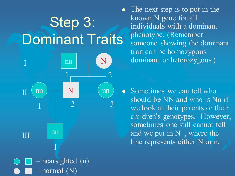 The next step is to put in the known N gene for all individuals with a dominant phenotype. (Remember someone showing the dominant trait can be homozygous dominant or heterozygous.)