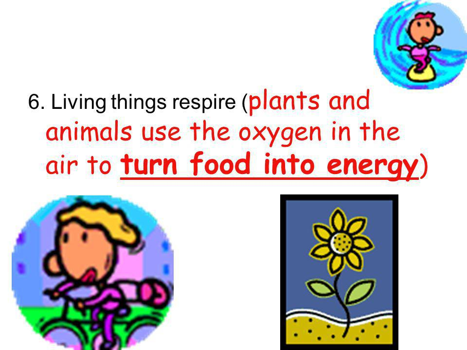 6. Living things respire (plants and animals use the oxygen in the air to turn food into energy)