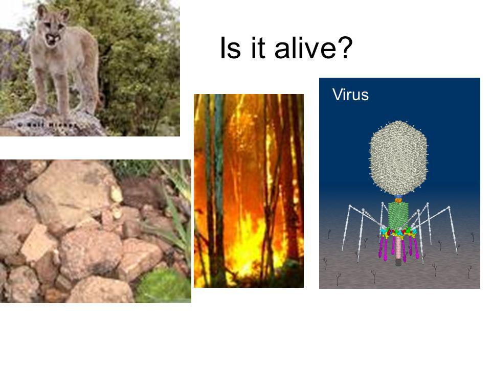 Is it alive Virus