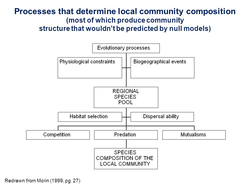 Processes that determine local community composition