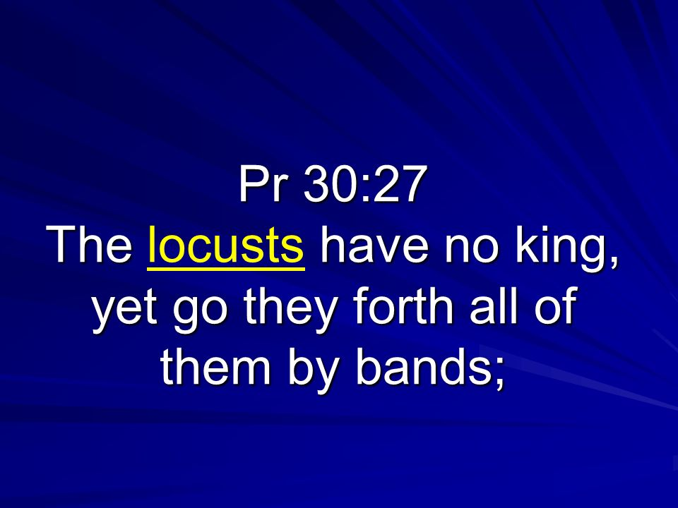 Pr 30:27 The locusts have no king, yet go they forth all of them by bands;