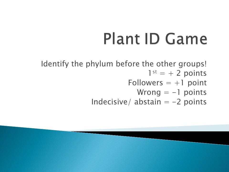 Plant ID Game Identify the phylum before the other groups!