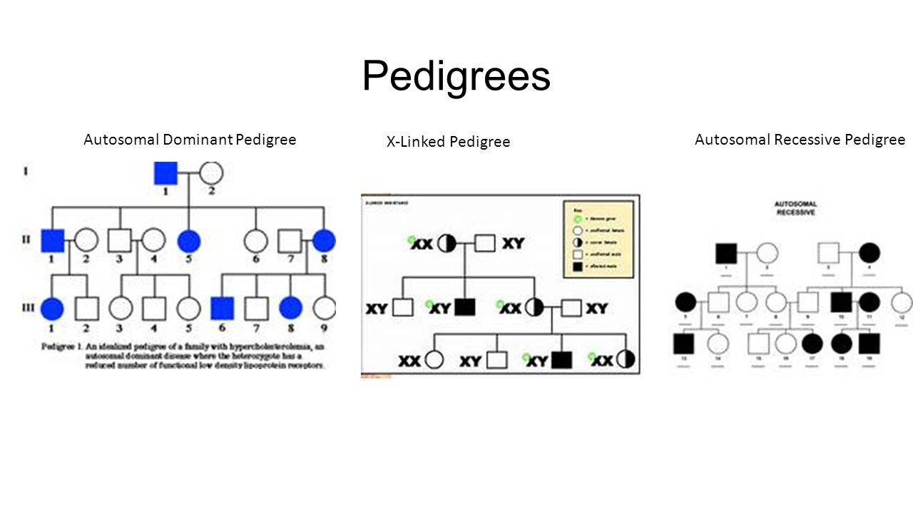 x linked recessive pedigree