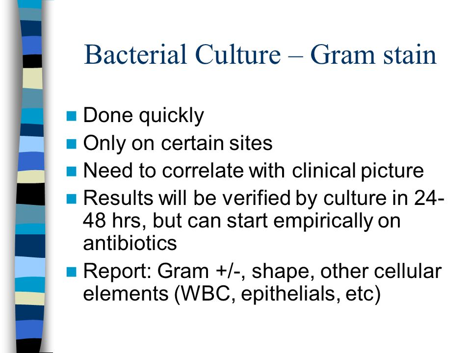 Bacterial Culture – Gram stain