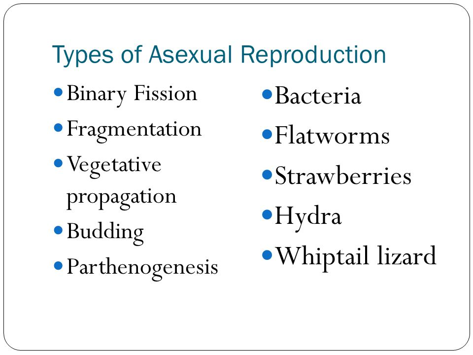 3 types of asexual reproduction photos 36