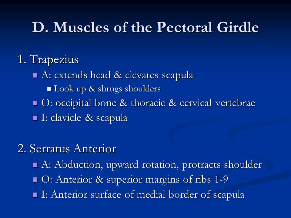 D. Muscles of the Pectoral Girdle