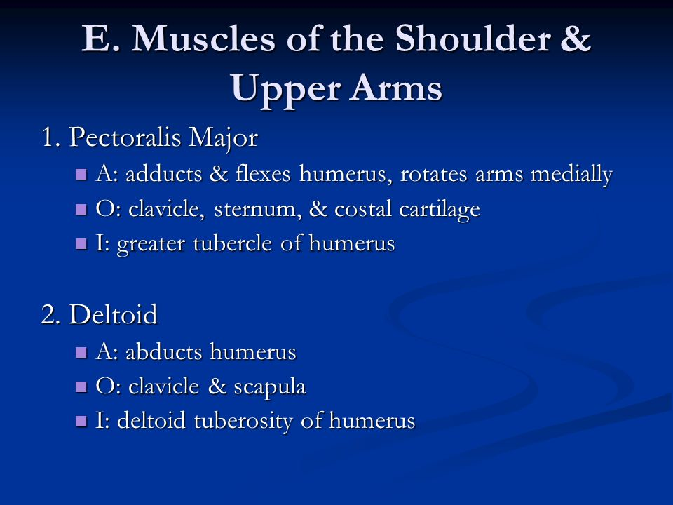 E. Muscles of the Shoulder & Upper Arms