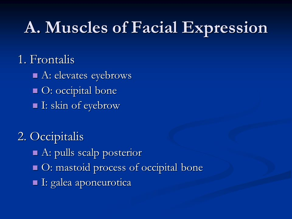 A. Muscles of Facial Expression