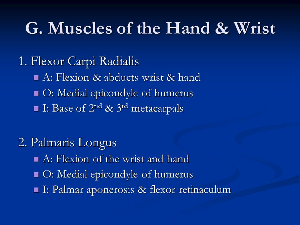 G. Muscles of the Hand & Wrist