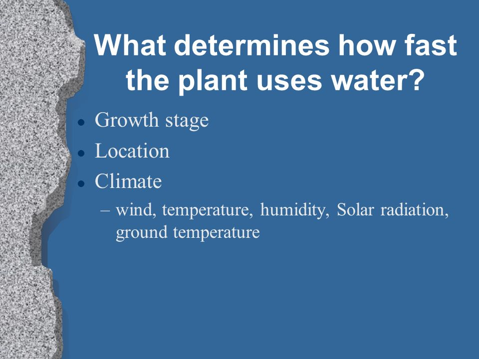 What determines how fast the plant uses water
