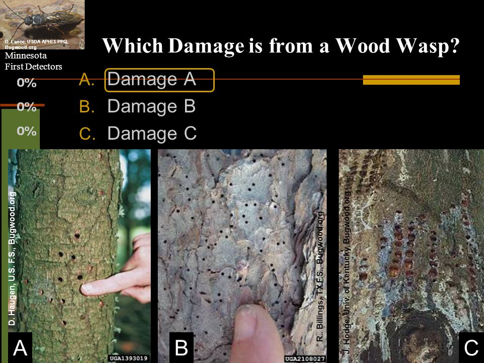 Which Damage is from a Wood Wasp