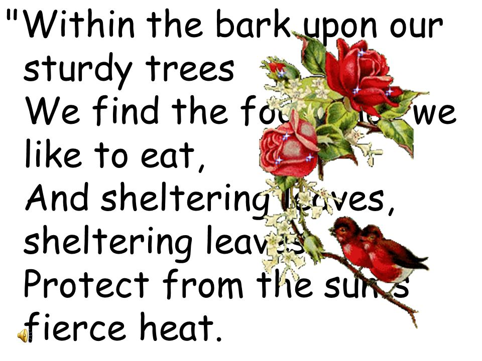 Within the bark upon our sturdy trees We find the food that we like to eat, And sheltering leaves, sheltering leaves, Protect from the sun s fierce heat.