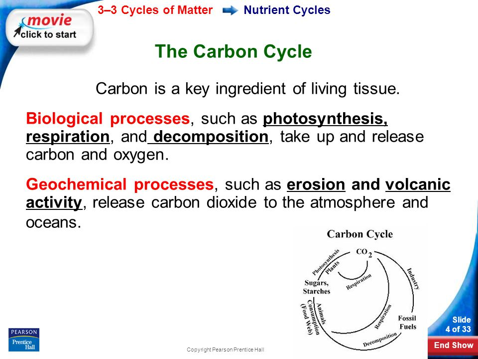 Ecology Ii Cycles Of Matter Ppt Download