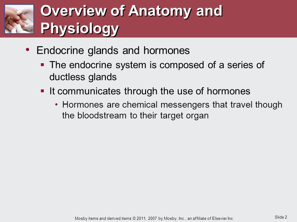 Chapter 11 Care of the Patient with an Endocrine Disorder - ppt download