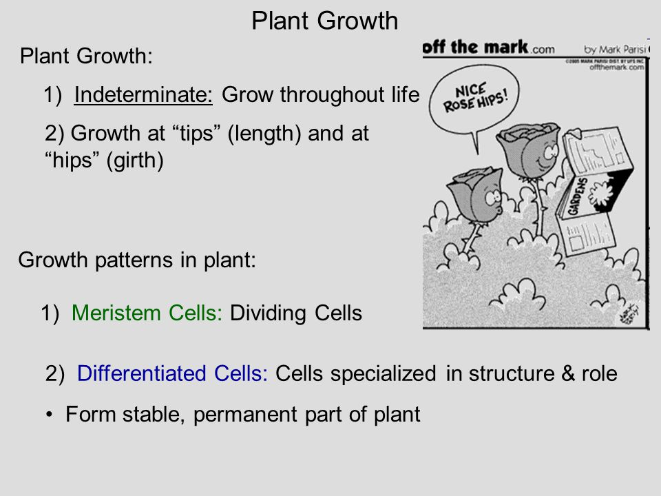 Plant Growth Plant Growth: 1) Indeterminate: Grow throughout life