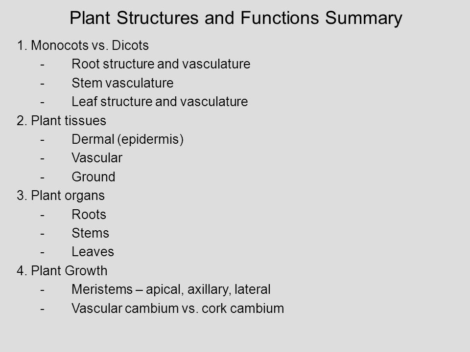 Plant Structures and Functions Summary