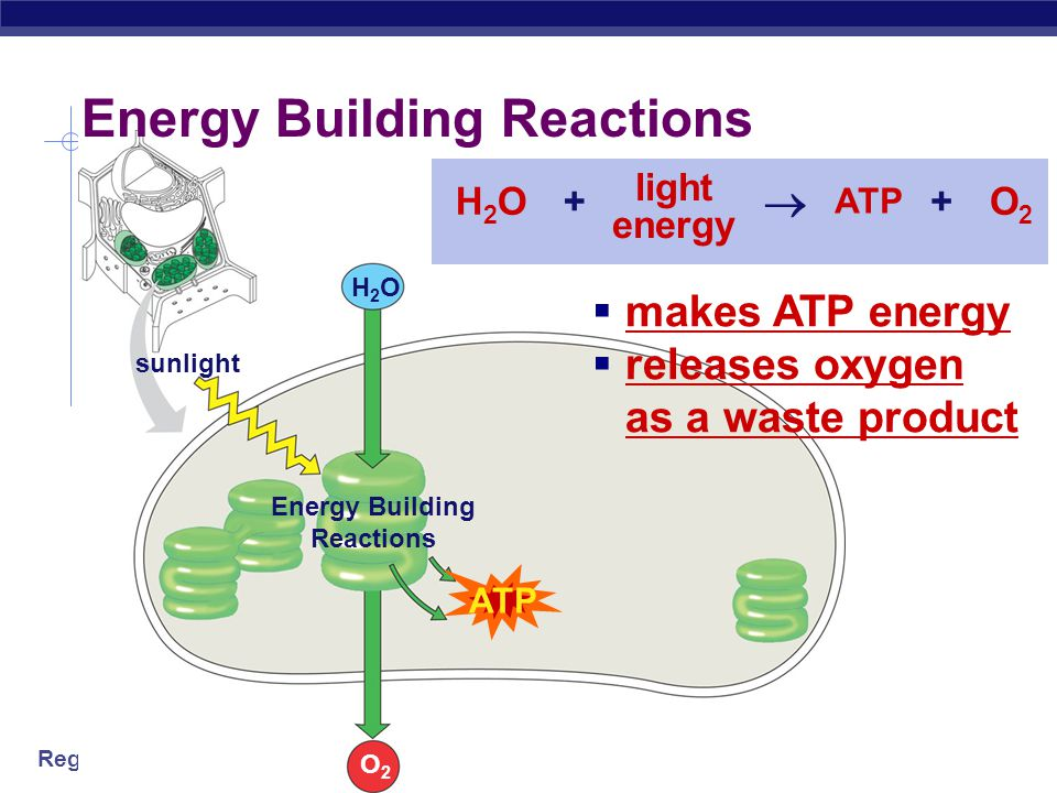 Energy Building Reactions