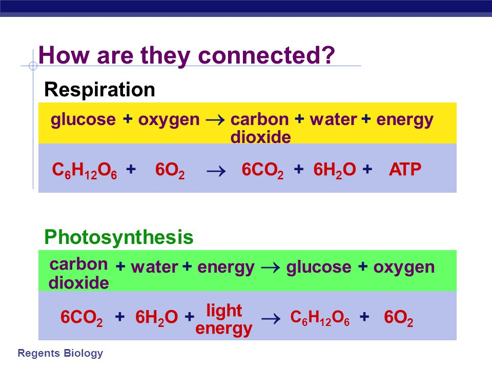 How are they connected Respiration  Photosynthesis 
