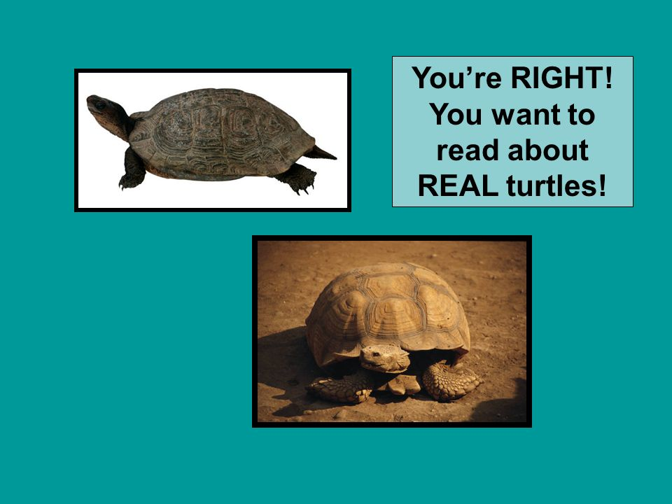 You're RIGHT! You want to read about REAL turtles!