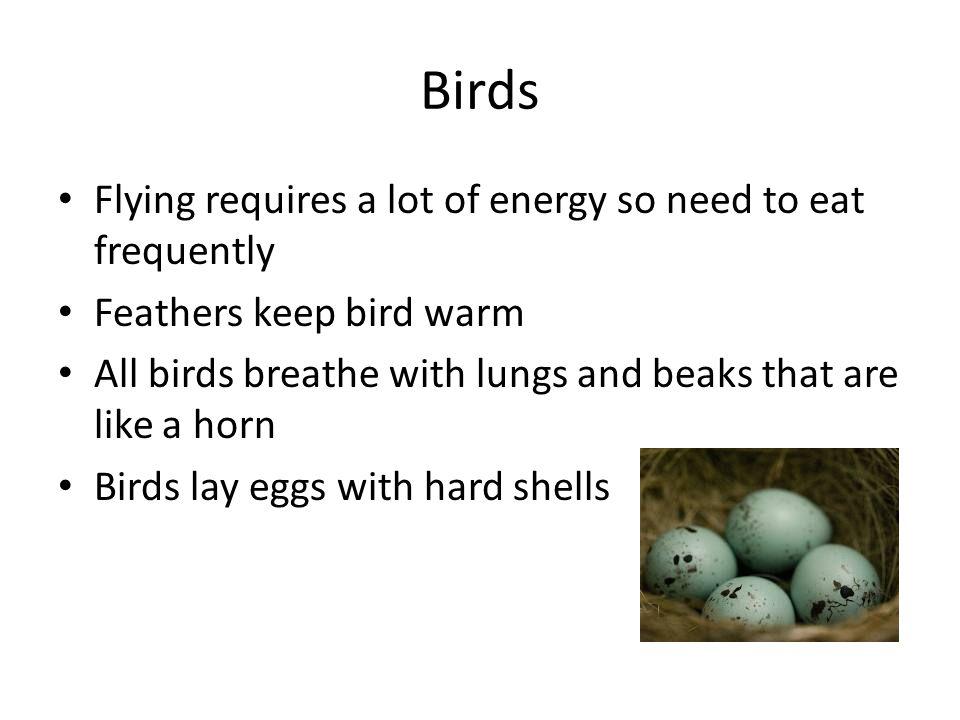 how to keep a bird warm