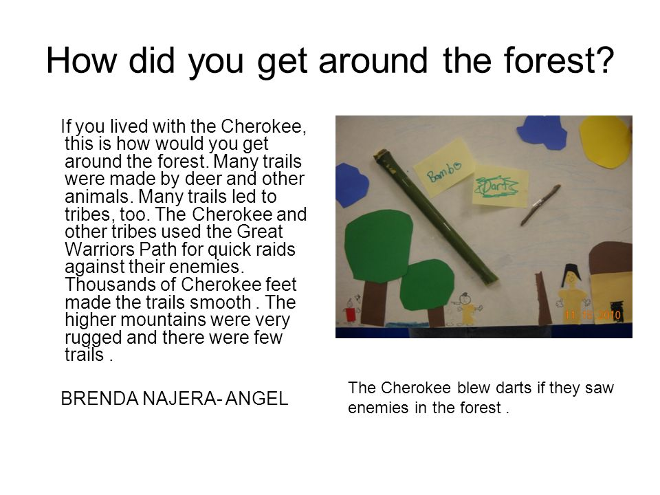 How did you get around the forest