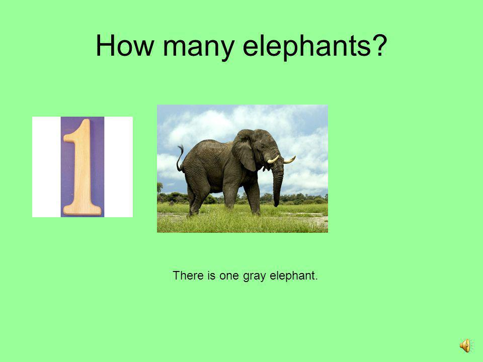 There is one gray elephant.