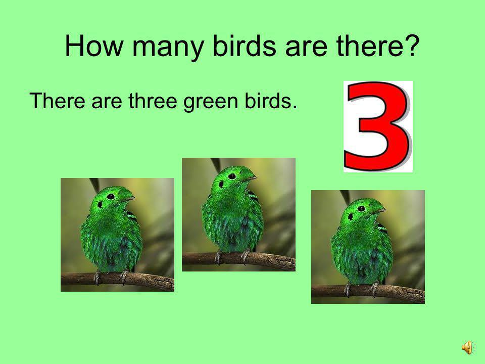 How many birds are there
