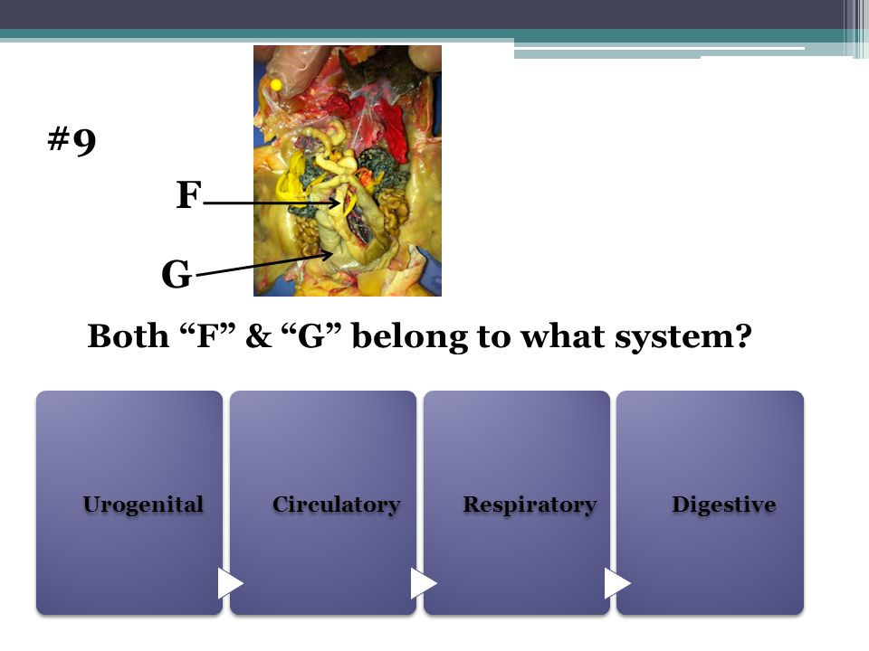Both F & G belong to what system
