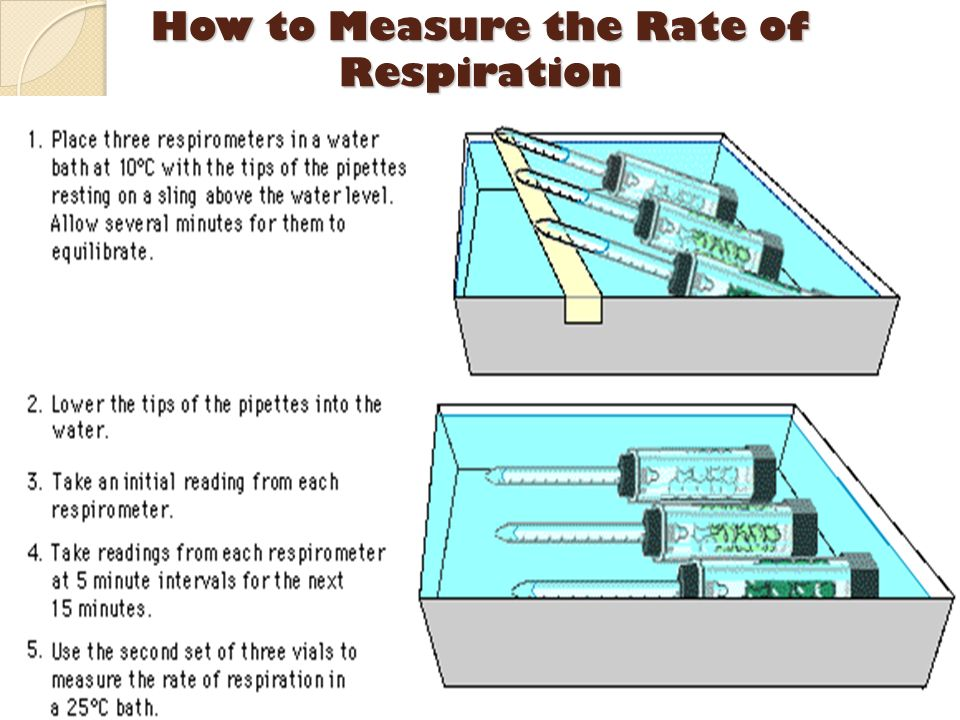 How to Measure the Rate of Respiration