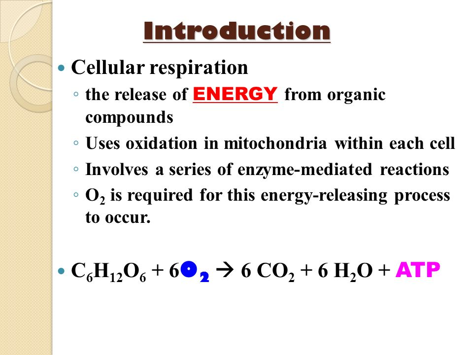 Introduction Cellular respiration C6H12O6 + 6O2  6 CO2 + 6 H2O + ATP